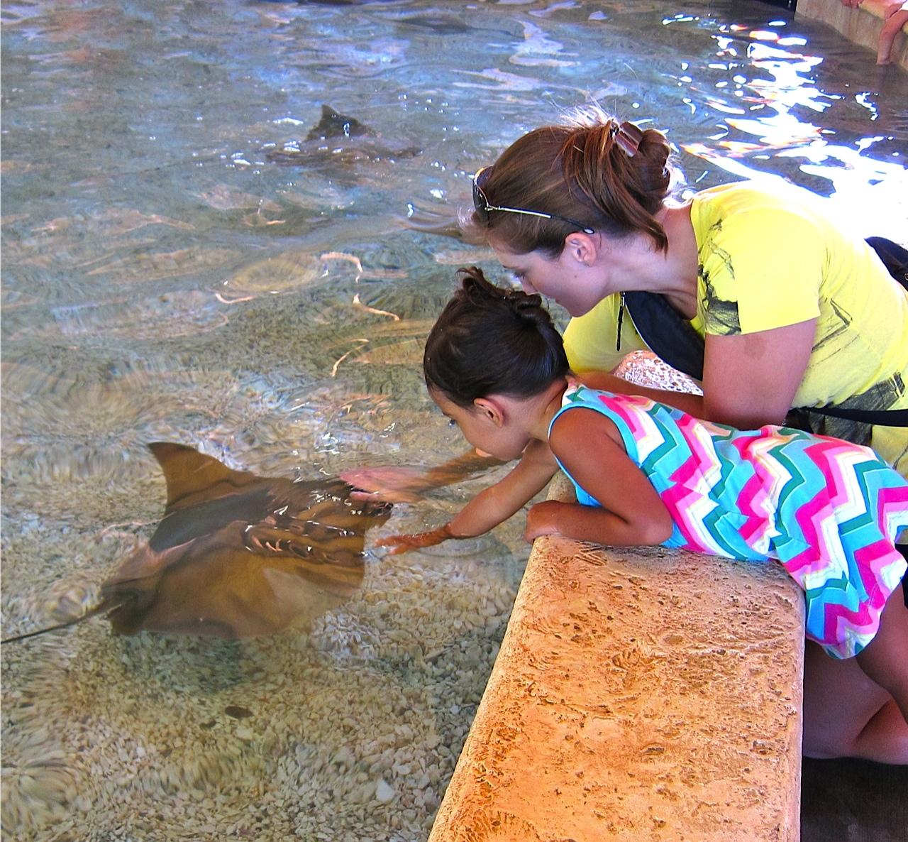 petting the manta ray