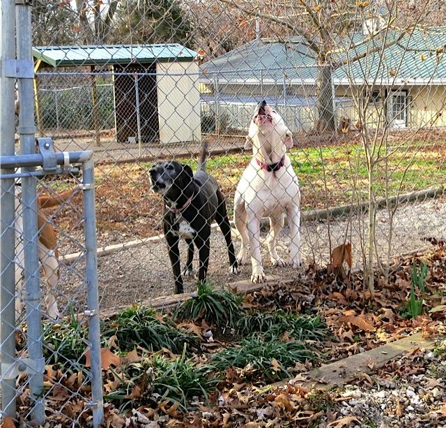 Elizabeth Niven Dogwood Farm