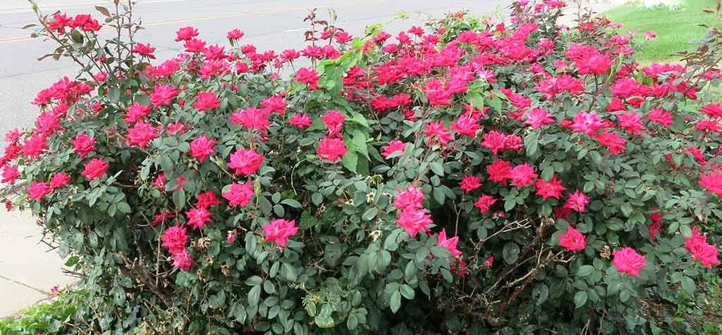 w-flowers