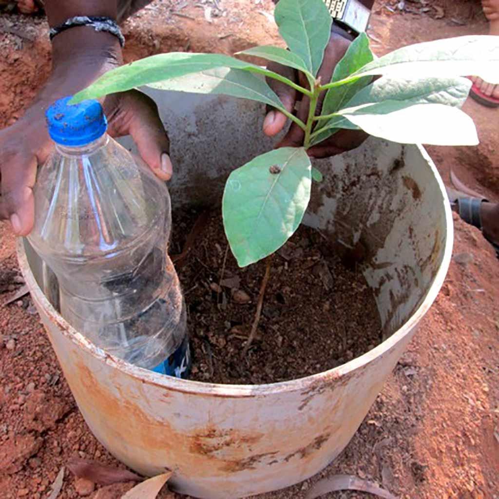 Lark-Rodman-Sadhana-wick-irrigation-system